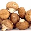 Mushroom Windowsill Kit - Chestnut