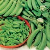 Pea Sugar Snap Delikett Seeds