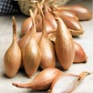 Shallot Triple Pack - Spring Planting