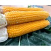 Sweet Corn Seeds - Snobaby F1