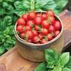 Tomato Seeds - F1 Baby Boomer