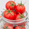 Grafted Tomato Plants - F1 Summerlast